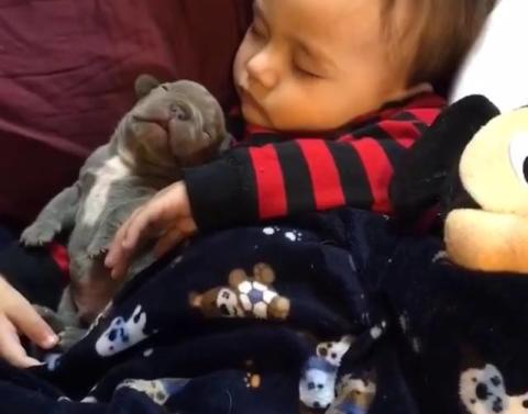 Baby and puppy share most adorable nap time