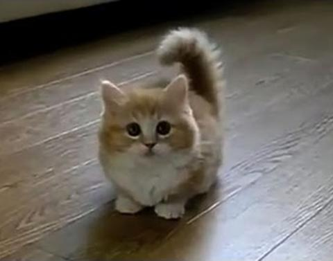 The top 10 cat videos of all time of all time