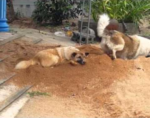 Dog tries to bury his brother alive