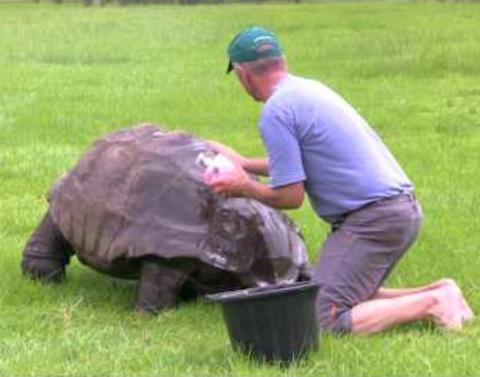 Insanely old tortoise receives first ever bath