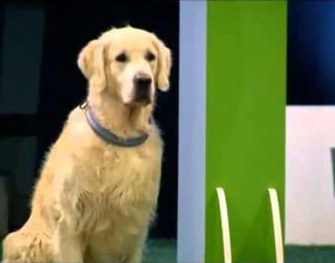 Dog fails at obedience but wins at life