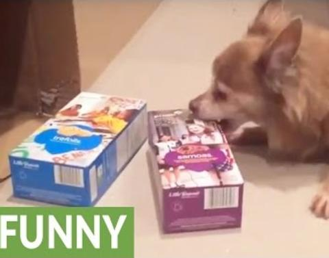 Even dogs are excited about girl scout cookies