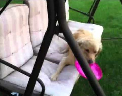 Dog struggles to figure out how to swing