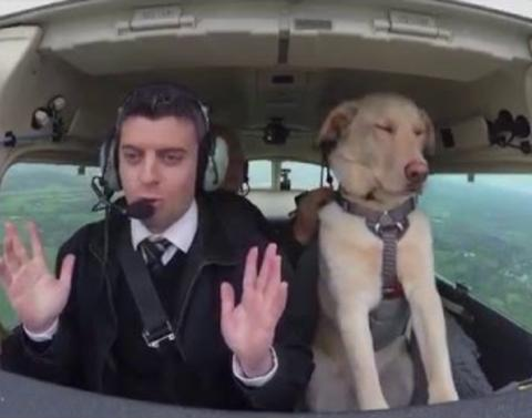 What are dogs really flying this plane