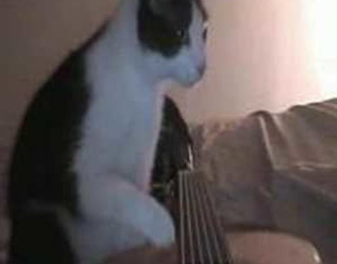 Musical cat plays guitar better than we can