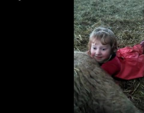 3 year actually delivers baby lamb all by herself