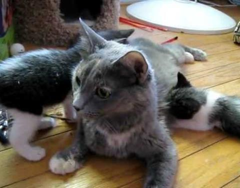 Completely adorable cat calls her kittens to lunch