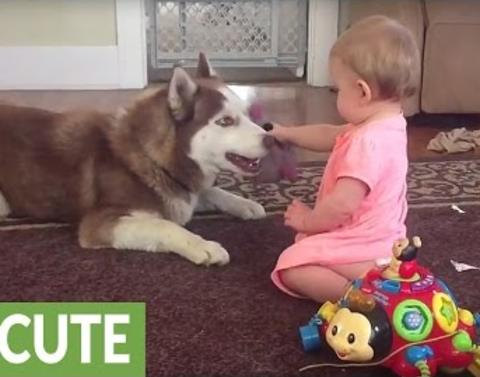 Husky says thank you after baby shares her toy