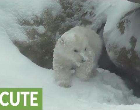 Baby polar bear experiences snow for first time