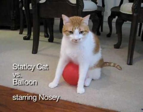 No where to run cat gets stuck to balloon