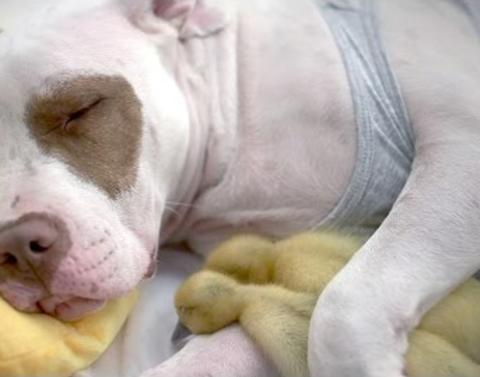 Rescue dog and adopted ducklings make one happy family
