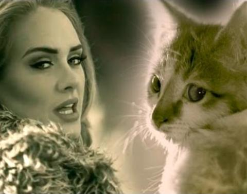 Its pawdele an adele parody helps kittens find homes