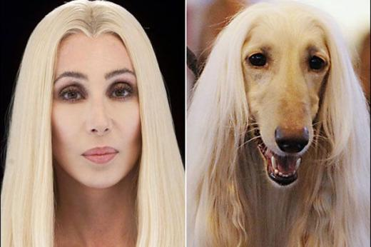 dog vs. cher