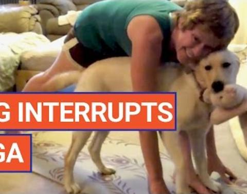 Dog is making it very difficult for owner to finish yoga routine