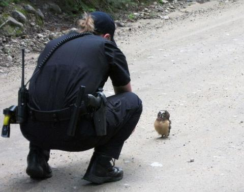 Baby owl wins staring contest with colorado police officer