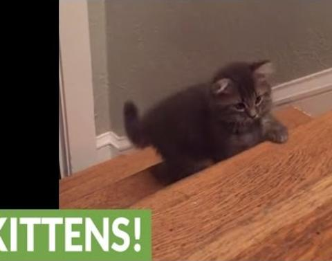Kittens adorably discover the fun of stairs