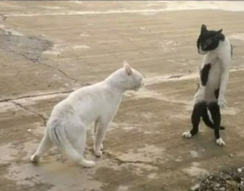 Karate Cat vs  Kung Fu Bear: Who Has the Better Moves? - MyFanatic