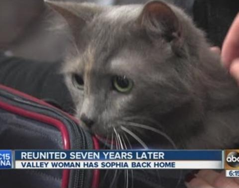 7 years and 400 miles cat and owner find one another