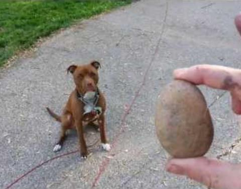 This dog loves his pet rock more than we love anything in the wo