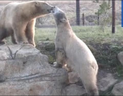 Even polar bears need a best friend