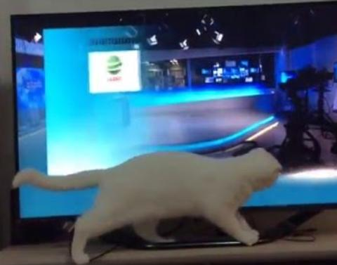 Determined cat cant catch that pointer