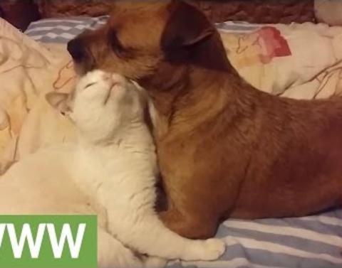 Can dogs and cats share true love take a look and see dot dot do