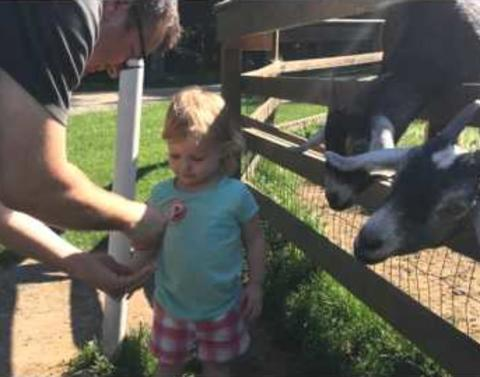 Little girl gets hair eaten by goat