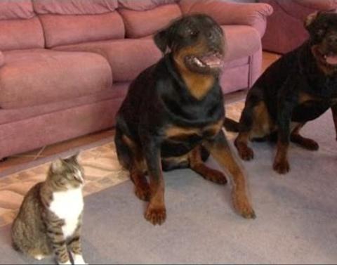Copy cat copies dog friends