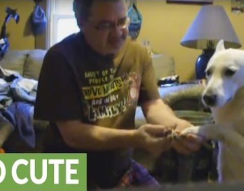 Dog actually allows his owner to trim nails