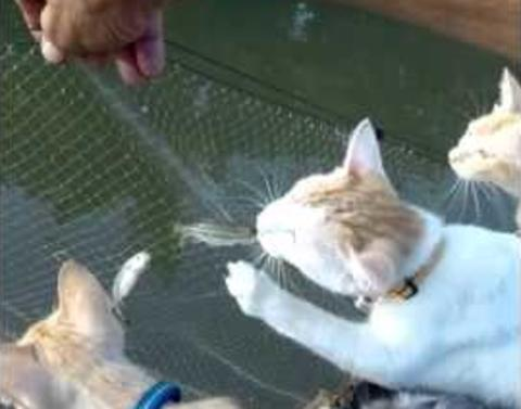 Cats go fishing but let owner do all the work