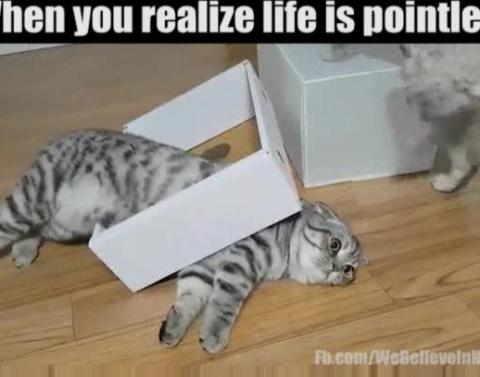 Cat vs box box wins