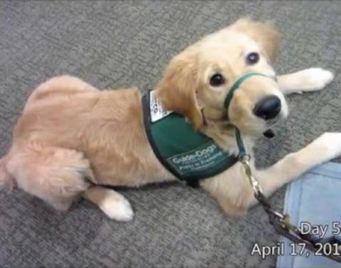 You need to see this adorable journey of a guide dog