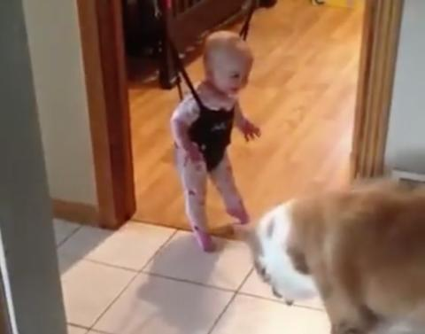 Dog tries very hard to teach baby how to jump