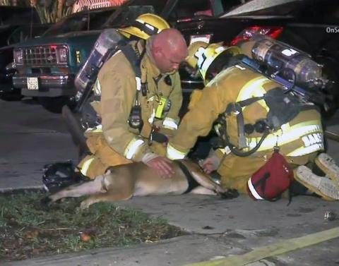 Firefighters rescue dog from house fire watch