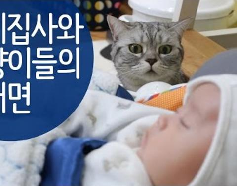 Cats meet new baby try to decide whether to keep him