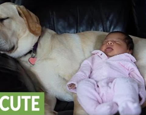 Meet the most patient and furry babysitter ever