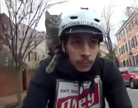 Cat happily rides on bike