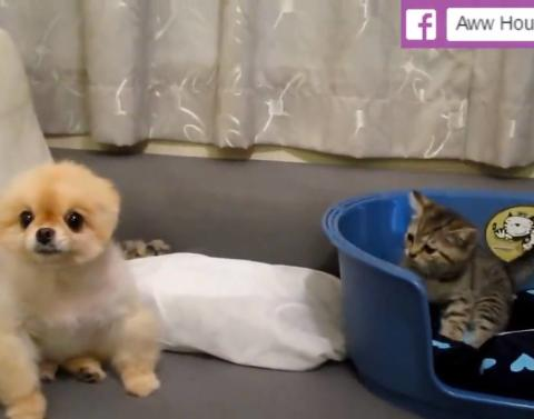 Dog vs kitten whos annoying who