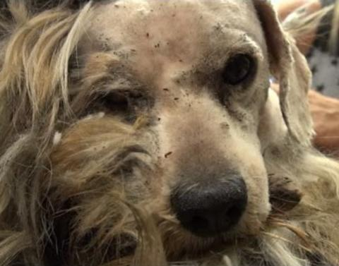 Homeless dog gets new lease on life