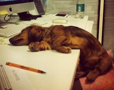 15 dogs who just fell asleep like that
