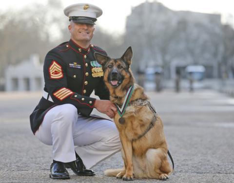 Hero dog 1