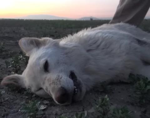 Abandoned dog in desert saved by unusual rescue