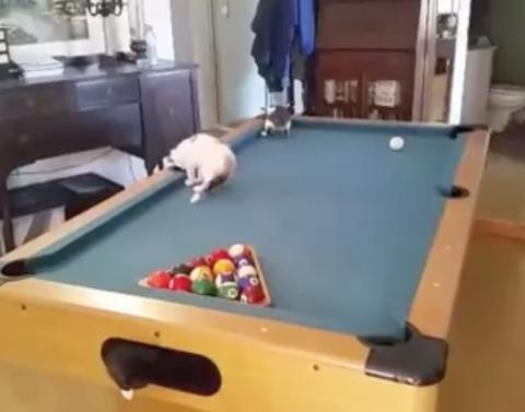 These cats are terrible at pool