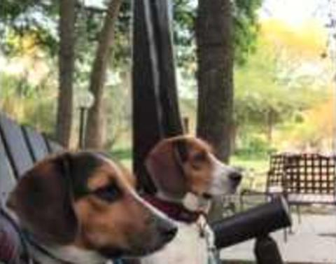 Dogs enjoy spring day with a swing