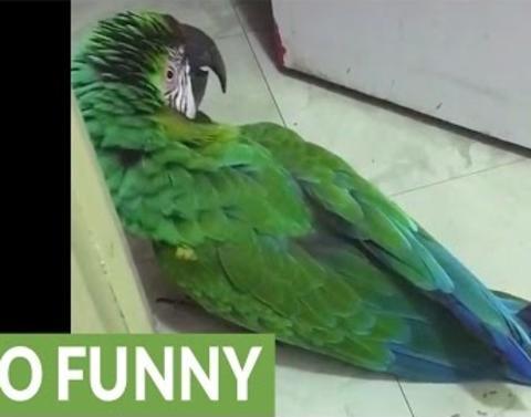 Parrot demands to know why door was locked