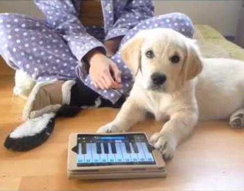 Adorable puppy plays piano and sings