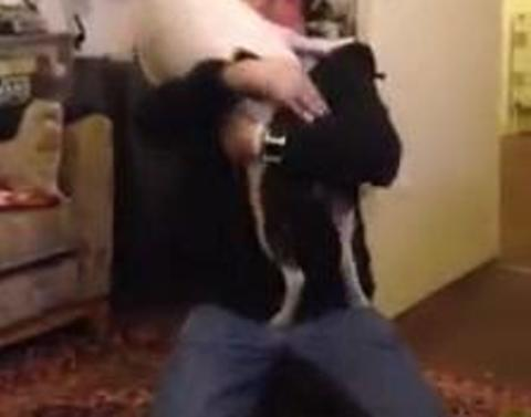 Pit bull welcomes owner home in most loving ecstatic way possibl