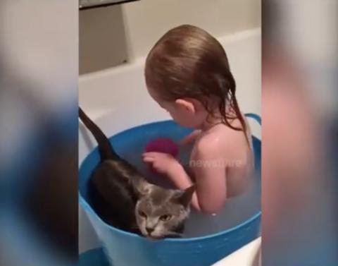 Little girl takes bath with very reluctant cat