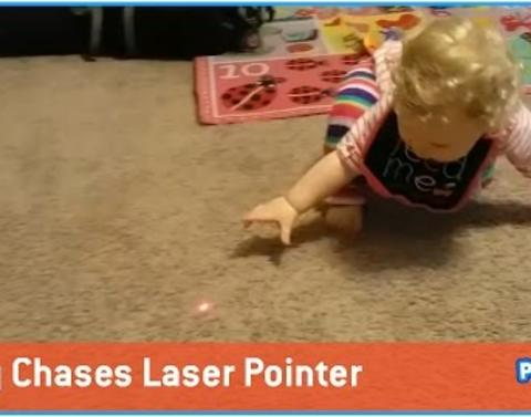Baby chases laser pointer wont give up until she catches it