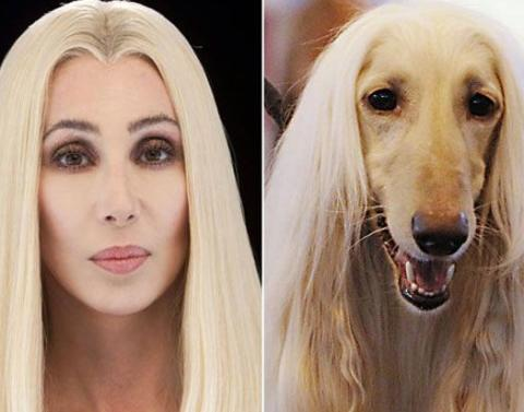 Dog vs cher